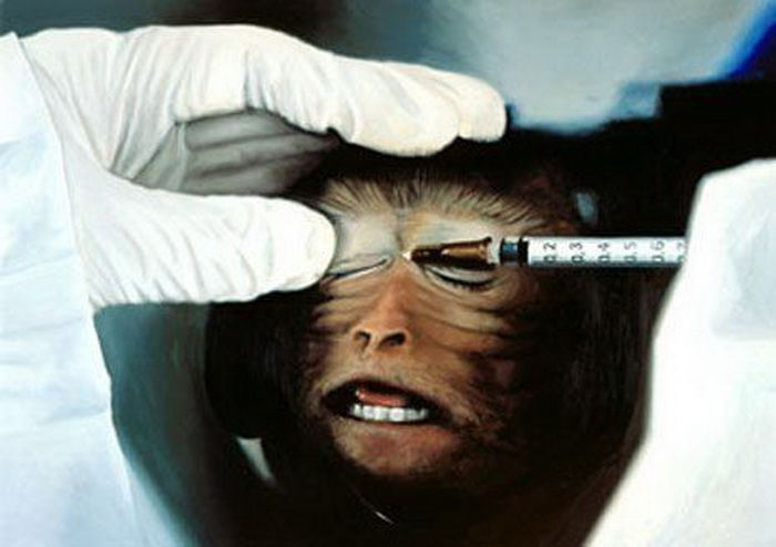 is animal testing a crime