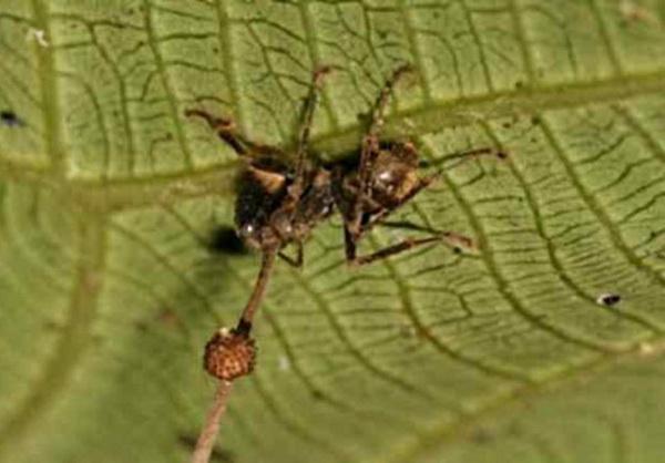 страшные паразиты в организме человека фото